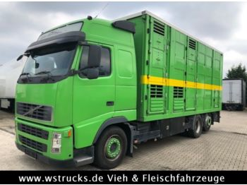 Volvo FH 440 Globetrotter Menke 3 Stock  - camion bétaillère